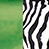 Amazonas cebra